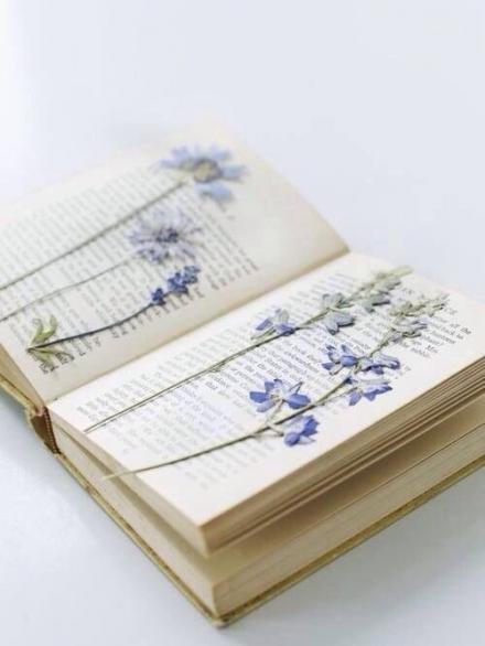 Knyga – vasaros prisiminimai